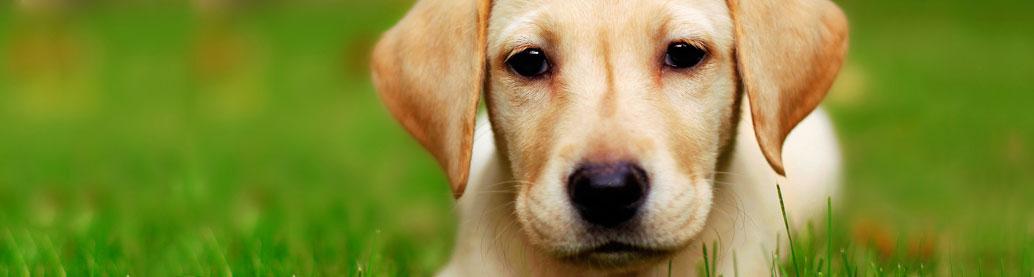 Odrobaczanie, szczepienia ochronne psów i kotów
